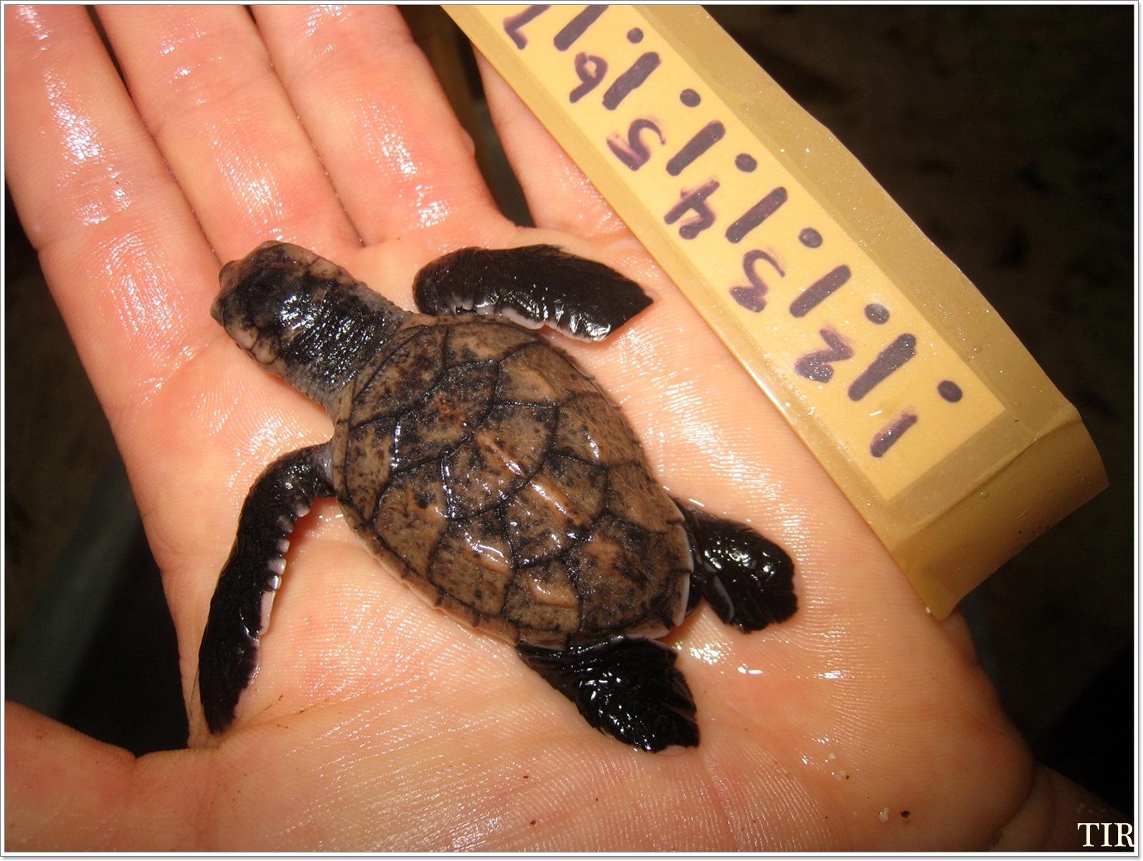 Turtles14.jpg